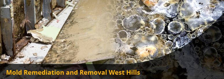 Mold Remediation and Removal West Hills CA